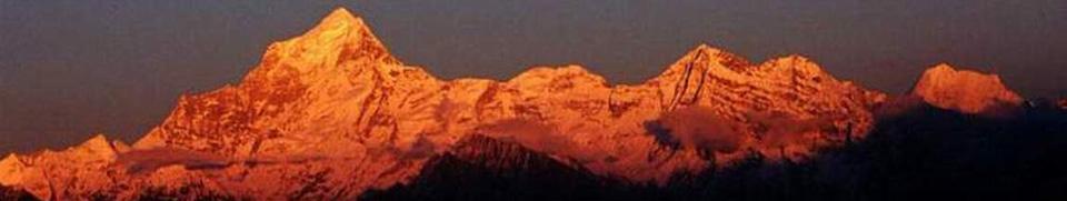 Himalayan Turmeric- Haldi